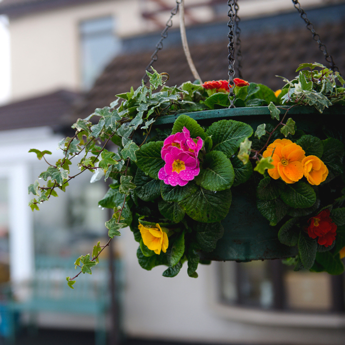 Flower Basket Hanging